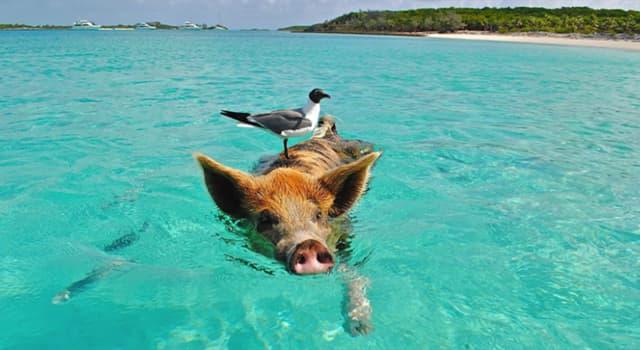 natura Pytanie-Ciekawostka: Które z wymienionych zwierząt jest świetnym pływakiem?