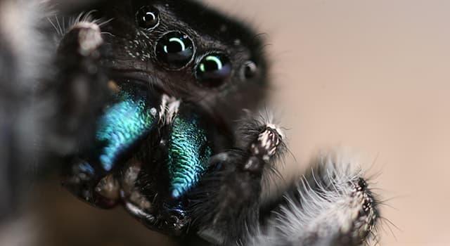 natura Pytanie-Ciekawostka: Który z tych pająków nie ma układu oddechowego?