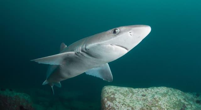 natura Pytanie-Ciekawostka: Który z tych rekinów jest jadowity?