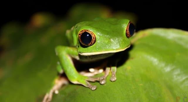 Kultura Pytanie-Ciekawostka: Kuchnia którego kraju jest znana z przygotowywania żabich udek?