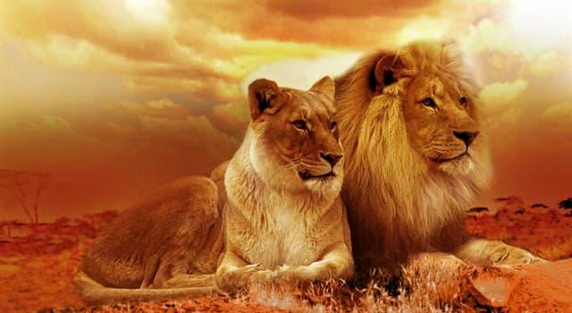 """Film & Fernsehen Wissensfrage: """"Leo the Lion"""" war das Logo welches Filmstudios?"""