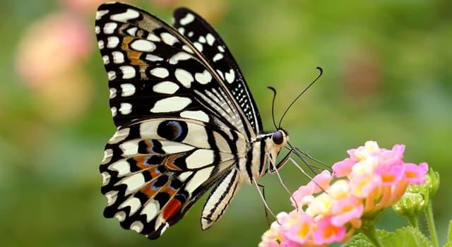 Natur Wissensfrage: Mit welchem wissenschaftlichen Namen werden Schmetterlinge bezeichnet?
