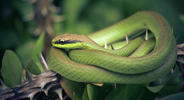 Nature Trivia Question: On which continent you would find no snakes?