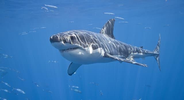 Географія Запитання-цікавинка: В якому прісноводому озері плавають акули?