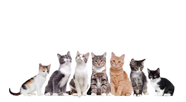Natur Wissensfrage: Was davon hat eine Manx-Katze nicht?