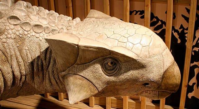 Natur Wissensfrage: Was davon war eine Besonderheit des Ankylosaurus?