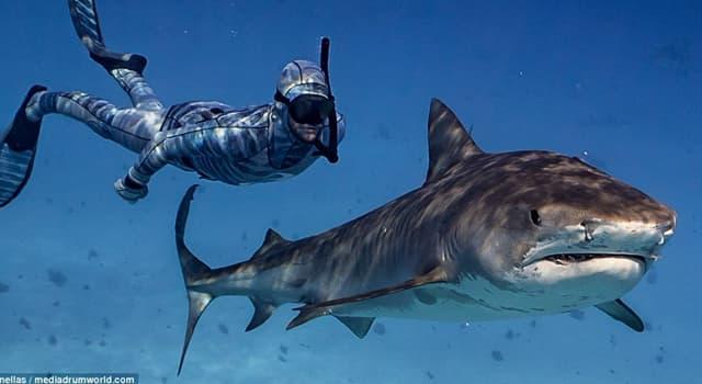 Natur Wissensfrage: Was hilft Haien beim Jagen ihrer Beute?