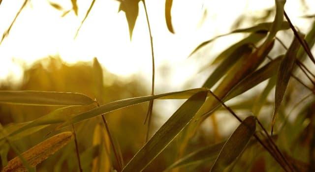 Natur Wissensfrage: Was ist die am schnellsten wachsende Pflanze der Erde?