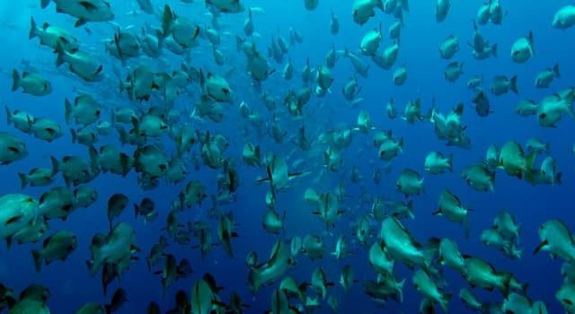 Natur Wissensfrage: Was ist KEINE Fischart?