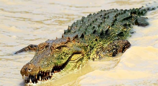Natur Wissensfrage: Welche Frucht nennt man auch Alligatorbirne?