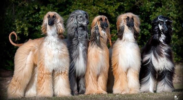 Natur Wissensfrage: Welche Hunderasse ist das?