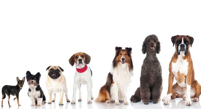 Natur Wissensfrage: Welche Hunderasse stammt aus Schottland?