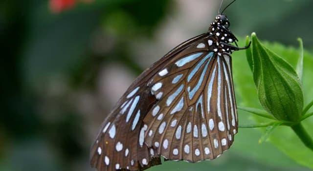 Natur Wissensfrage: Welche Ordnung von Tieren beinhaltet Schmetterlinge und Motten?