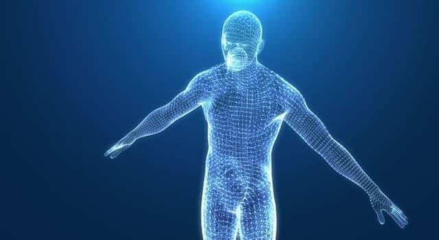 Wissenschaft Wissensfrage: Welchen Teil des menschlichen Körpers bezeichnet man mit dem lateinischen Begriff Septum?