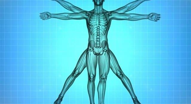 Wissenschaft Wissensfrage: Welcher der folgenden Teile des menschlichen Körpers hört nie auf zu wachsen?