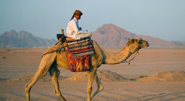 Gesellschaft Wissensfrage: Welcher dieser Begriffe wird im Allgemeinen auf arabische Nomaden angewendet?