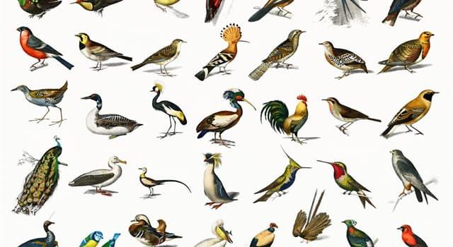 Natur Wissensfrage: Welcher von diesen ist ein großer ausgestorbener flugunfähiger Vogel?