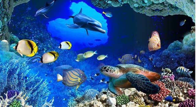 Natur Wissensfrage: Welcher von diesen ist ein luftatmender Fisch?