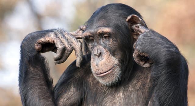 Natur Wissensfrage: Welches dieser Tiere hat Hörprobleme?