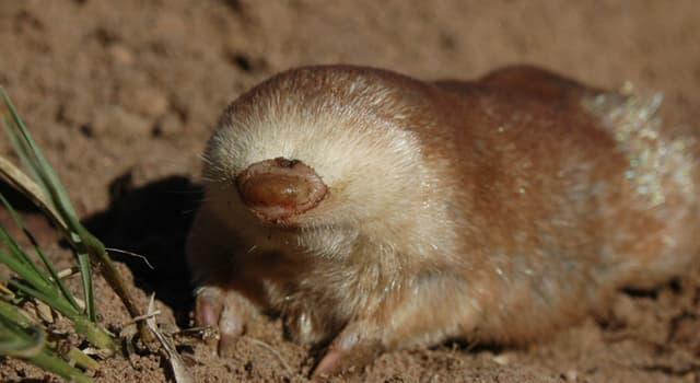 Natur Wissensfrage: Welches grabende Säugetier ist auf dem Bild zu sehen?