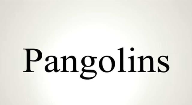 Natur Wissensfrage: Welches Tier ist morphologisch einem Pangolin ähnlich?