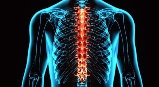 Science Trivia Question: What is a triangular bone at the base of the spine called?