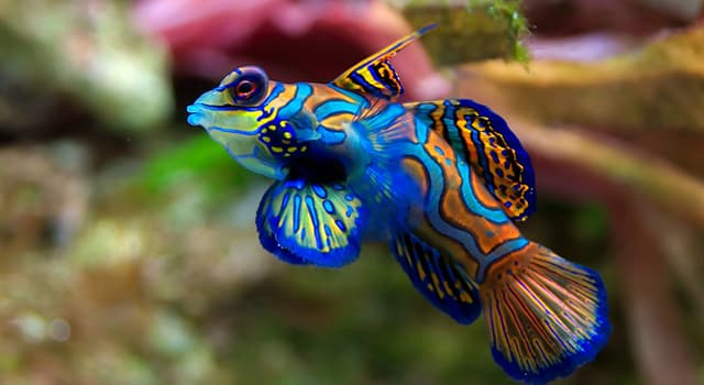Nature Trivia Question: What is the name of this tropical fish?