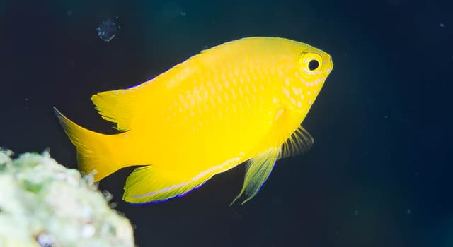 Nature Trivia Question: Where on a fish can you find its dorsal fin?