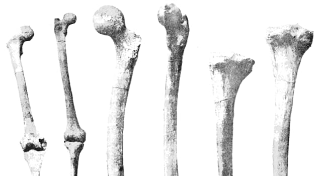 Science Trivia Question: Where in the body are the hamate bones?
