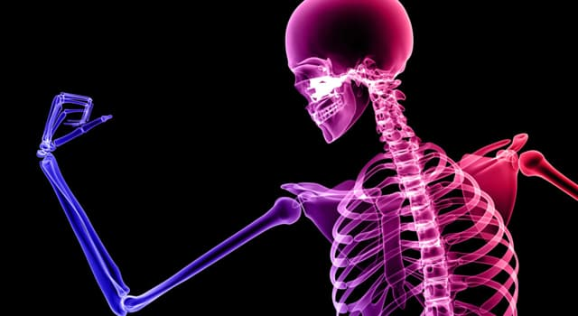 Science Trivia Question: Where on the body is the hyoid bone?