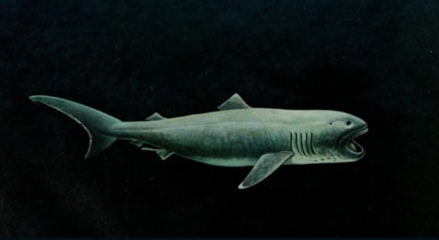 Nature Trivia Question: Where was the first megamouth shark discovered?