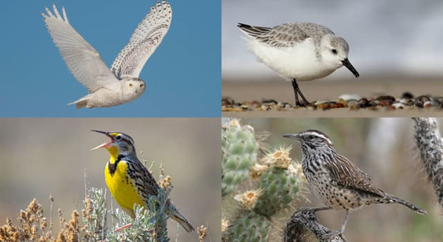 Nature Trivia Question: Which birds of the order Cuculiformes often lay their eggs in the nests of other species?