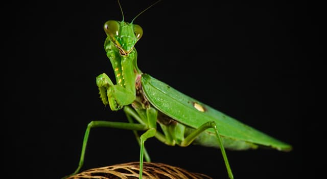 Nature Trivia Question: Which insect is pictured?