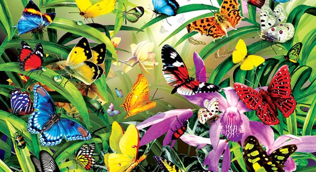 Nature Trivia Question: Which is Florida's state butterfly?