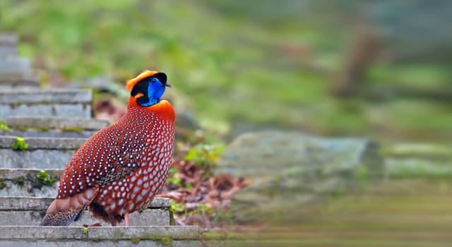 Naturaleza Pregunta Trivia: ¿Qué ave se muestra en la imagen?