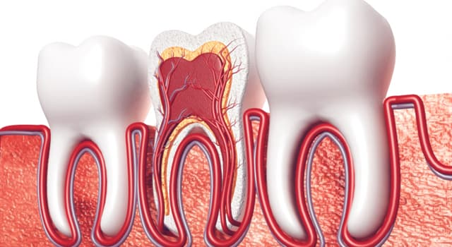Science Trivia Question: Which of these dental specialties is concerned with the study and treatment of the dental pulp?