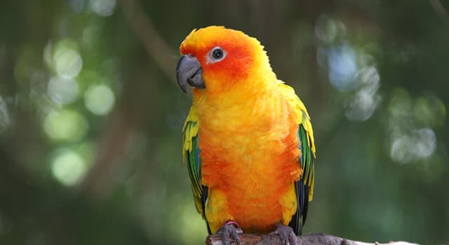 Nature Trivia Question: Which of these do most parrots eat?