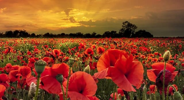 """Culture Trivia Question: Who wrote the famous poem """"For the Fallen""""?"""