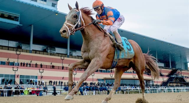 Sport Wissensfrage: Wie alt sind Pferde, die am Kentucky Derby teilnehmen?