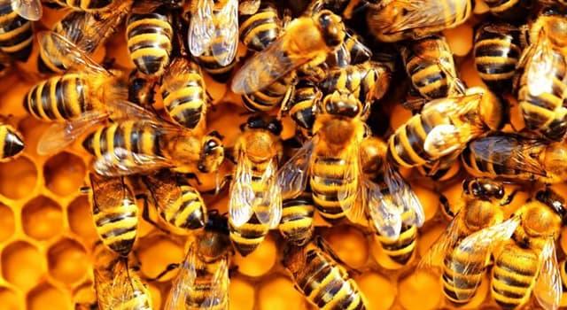 Gesellschaft Wissensfrage: Wie bezeichnet man die übersteigerte Furcht vor Bienen?