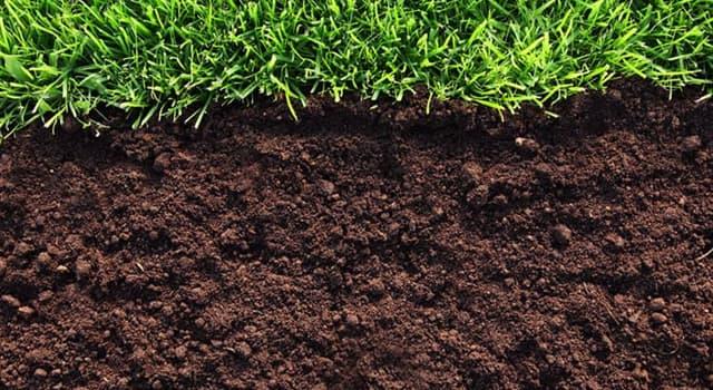Natur Wissensfrage: Wie heißt die Erdschicht, die als Medium für das Pflanzenwachstum dient?