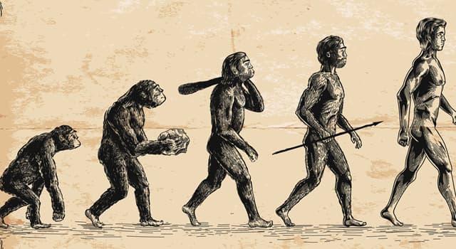 Wissenschaft Wissensfrage: Wie heißt eine Einheit, die in der Evolutionsforschung verwendet wird?