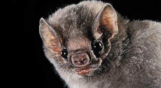 Natur Wissensfrage: Wie heißt eine Gruppe von Fledermäusen?