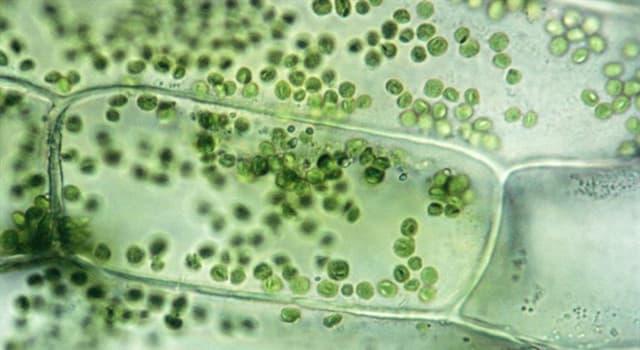 Wissenschaft Wissensfrage: Wie nennt man den äußersten Teil der Zelle?