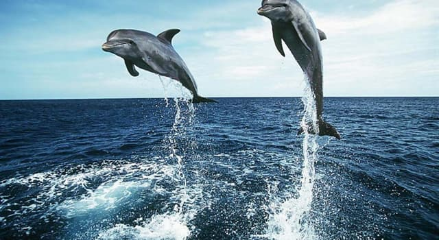 Natur Wissensfrage: Wie nennt man eine Gruppe Delfine?