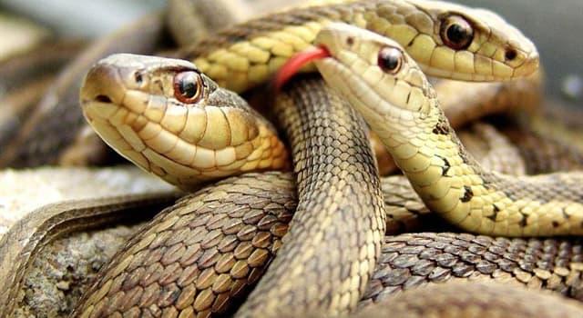 Natur Wissensfrage: Wie viele Arten (Typen) von Schlangen gibt es (Stand 2019) ungefähr auf der Welt?