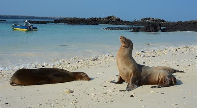 Geographie Wissensfrage: Zu welchem Land gehören die Galapagosinseln?