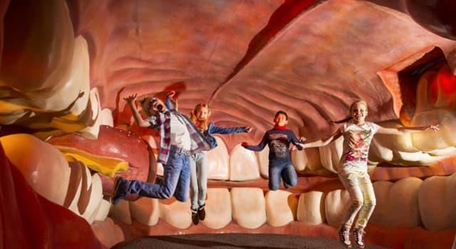 Культура Запитання-цікавинка: Де знаходиться музей людського тіла?