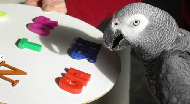Nature Trivia Question: How old was Alex the parrot, the subject of an experiment by Irene Pepperberg, when it died?