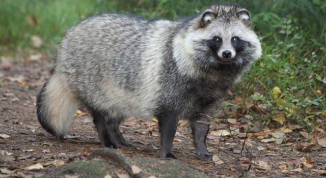 природа Запитання-цікавинка: Як називається ця тварина?